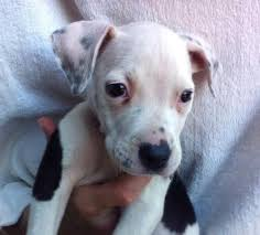 20 criminally cute puppies that need to be adopted on petfinder