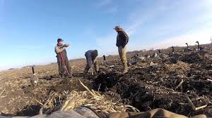 How To Make A Layout Blind Digging Goose Blind Pits Youtube