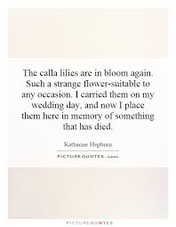 wedding flowers quote form the calla lilies are in bloom again such a strange picture