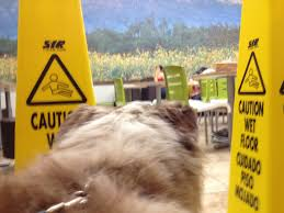 australian shepherd undercoat rake a few more aussie shaving tips