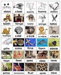 animal body parts vocabulary learning english