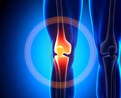 Anatomy Of The Knee Watchfit Anatomy Of The Knee Joint