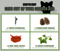 How To Keep Cats Out Of Your Backyard 6 Effective Ways To Keep Cats Out Of Gardens U0026 Flower Beds
