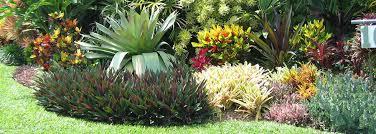 download tropical landscape pictures solidaria garden
