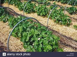 netting fruit stock photos u0026 netting fruit stock images alamy