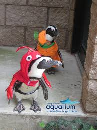 aquarium halloween photos long island aquarium dresses penguins in halloween