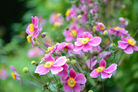 the flowers of summer at vermont garden journal filling in the late summer color gap with