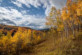 Ohio forest images Ohio creek road gunnison national forest bob dent photography jpg