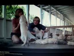 126 best marley and me images on pinterest marley and me