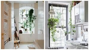 plante cuisine habiller les murs avec des plantes