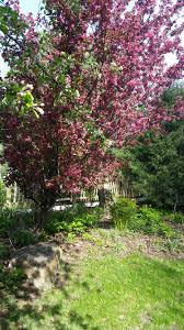 Beautiful Pictures Of Spring by Spring Lakeview Ranch