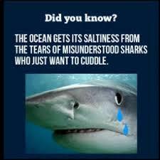 Shark Meme - what can the funniest shark memes on the internetz teach us about