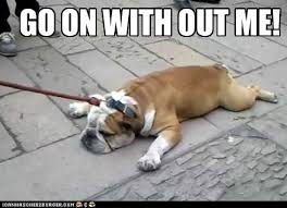 Tired Dog Meme - quick before it s too late i has a hotdog dog pictures funny