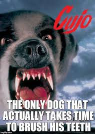 Stephen Dog Meme - image tagged in stephen king dogs evil horror movie books imgflip