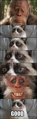Tardar Sauce Meme - harry henderson meets tardar sauce grumpy cat know your meme