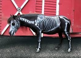 Horse Halloween Costumes Sale Halloween Costume Contest Lil Beginnings Miniature Horse Talk