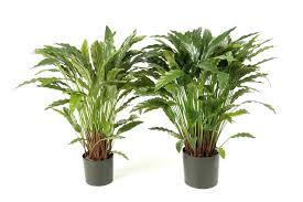 plante verte bureau plantes vertes plante pour le bureau plante pour bureau sans fenetre