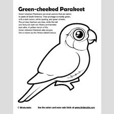 green coloring page green cheeked parakeet coloring page u003c fun free downloads