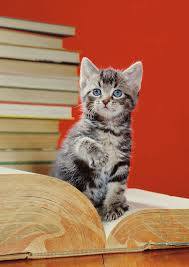 watch out authors f king adorable cats are taking over bookstore