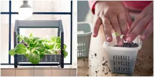 ikea indoor gardening kit krydda växer series