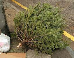 christmas tree recycling made easy the journal of the san juan