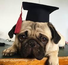 dog graduation cap dog graduation cap costume clothing puppy pet apparel ebay