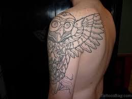 Owl Shoulder - 77 best owl on shoulder