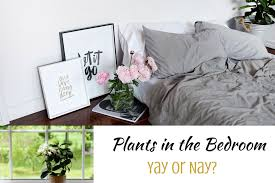 amused bedroom plants 40 including home decorating plan with