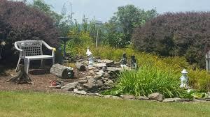 backyard garden bird sanctuary stunning youtube