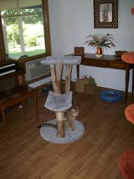 cat tree kingdom 2 level cat trees