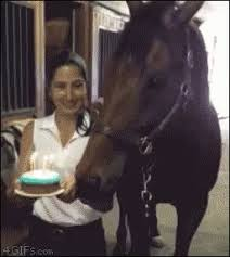Horse Birthday Meme - horse birthday meme gifs tenor