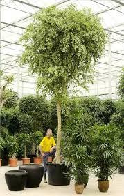 large tree pots wholesale large plant pots ikea large plastic