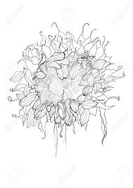 pencil drawing sunflower sketch royalty free cliparts vectors