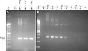 tracking false negative results in molecular diagnosis proposal