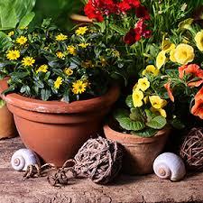 balkon blumen balkonblumen einjährig und zweijährig sonne halbschatten schatten