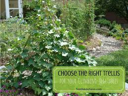choose the right trellis for your climbing vegetables tenth acre