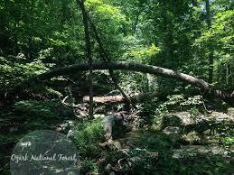 Arkansas forest images Arkansas giants champion trees only in arkansas jpg