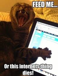 Feed Me Meme - feed me cat humor
