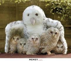 Owl Memes - owl memes funny owl pictures memey com