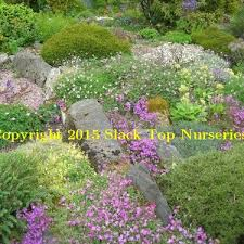 welcome to slack top nurseries and garden west yorkshire uk u2013 plants
