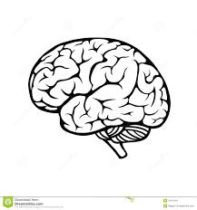 human brain stock image image 34191041