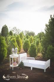 san diego christmas tree farms christmas lights decoration