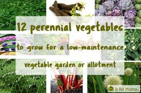 12 perennial vegetables for a low maintenance allotment h is for
