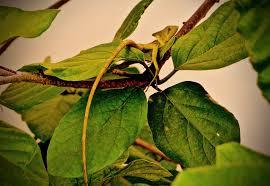 lizard hiding chelem mx people places u0026 coffee
