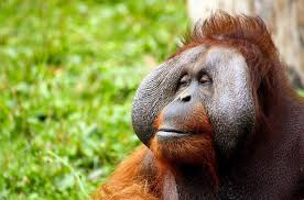 animal cognition investigating the mental capacities of animals