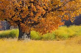 visit manistee michigan fall colors mason county scottville