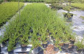 place one of this plants on every 9 square meters and get clean