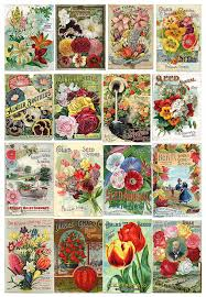 flower seed packets vintage flower seed packets 1 painting by peggy collins
