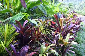 Tropical Plants Gardens El Arish Tropical Exotics Lush Tropical Plants For Australia