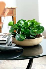 beautiful house plants indoor plant decoration ideas beautiful houseplants living room
